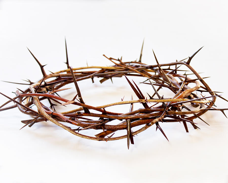 Crown of thorns 2